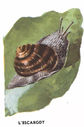 dessins_lecons_de_choses_CM1_-_escargot.jpg