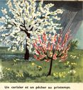 dessins_lecons_de_choses_cours_elementaire_-76-_cerisier_et_pecher_en_fleurs_au_printemps.jpg