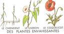 Lecons_de_choses_au_cours_moyen_123_des_plantes_envahissantes_-chiendent_liseron_coquelicot-.jpg