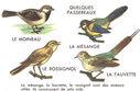 Lecons_de_choses_au_cours_moyen_167_quelques_passereaux_-moineau_mesange_rossignol_fauvette-.jpg