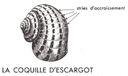 Lecons_de_choses_au_cours_moyen_204_coquille_d_escargot.jpg