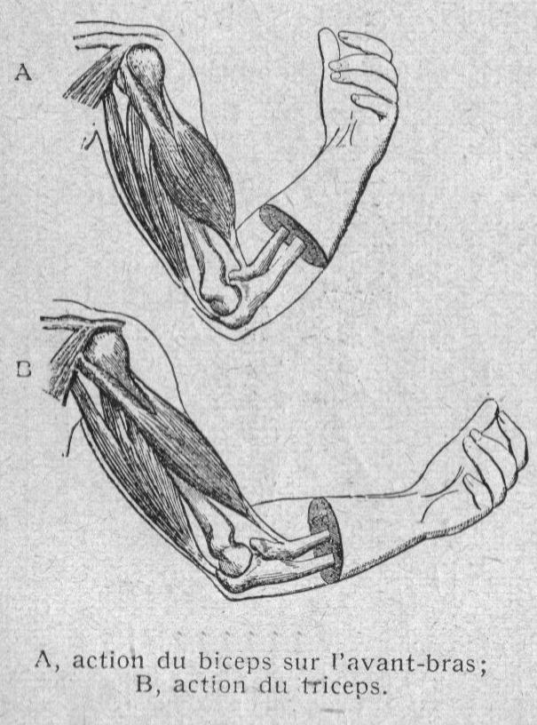Captain Biceps l'intrépide (Book, 2014) [WorldCat.org]