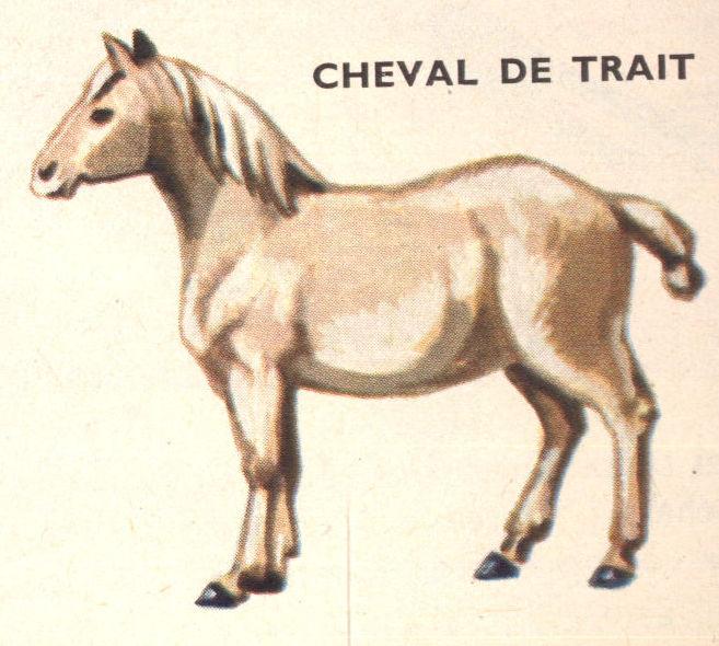 Dessins scolaires dessin scolaire 11h cheval de trait - Dessin cheval de trait ...