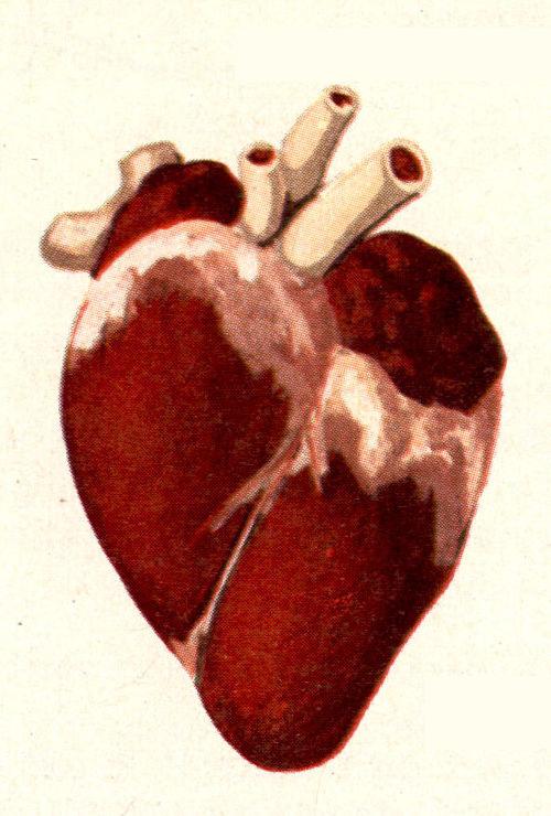 Dessin Coeur Humain dessins scolaires - dessin scolaire 22a coeur humain - gravures
