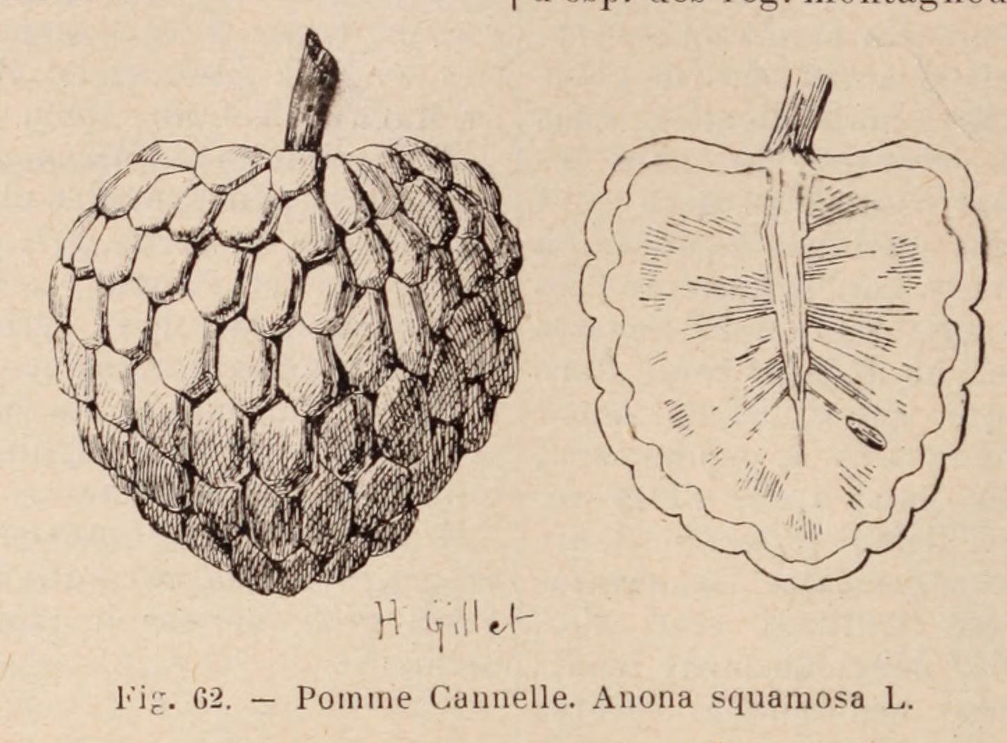 Dictionnaire Horticulture En Images Dictionnaire Images