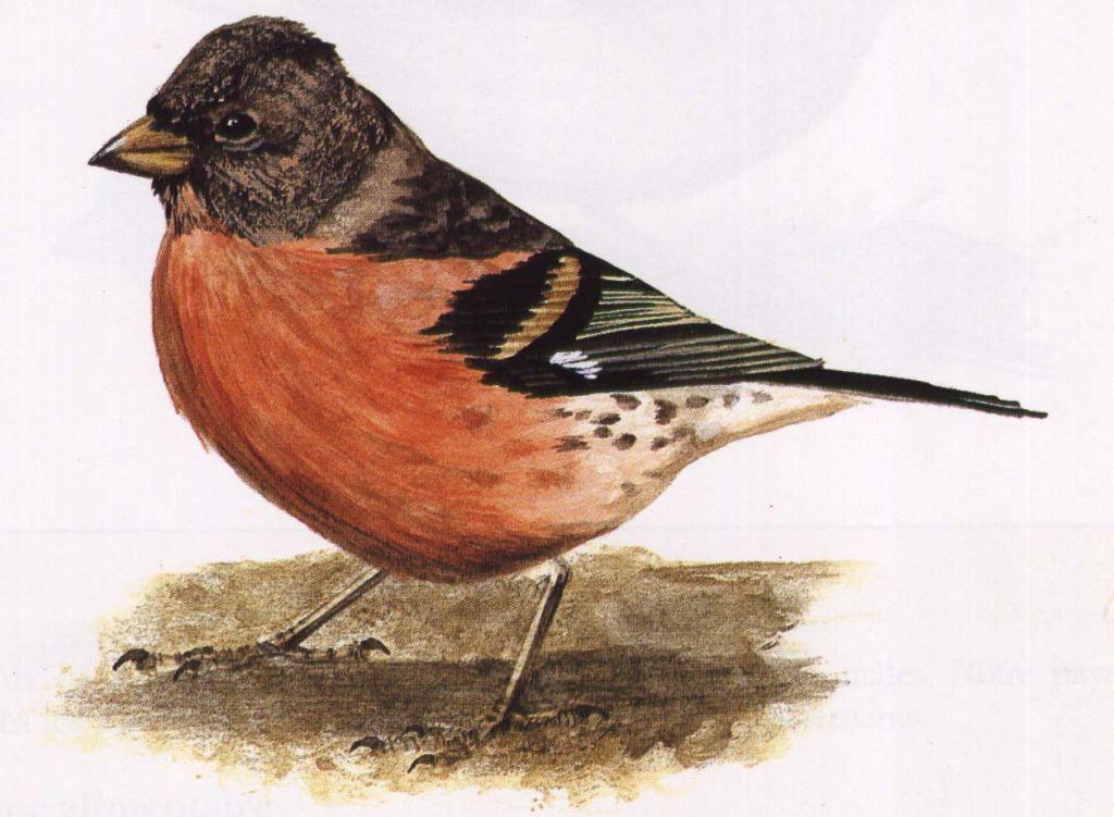 Dessins petits oiseaux dessins de petits oiseaux for Les petits oiseaux