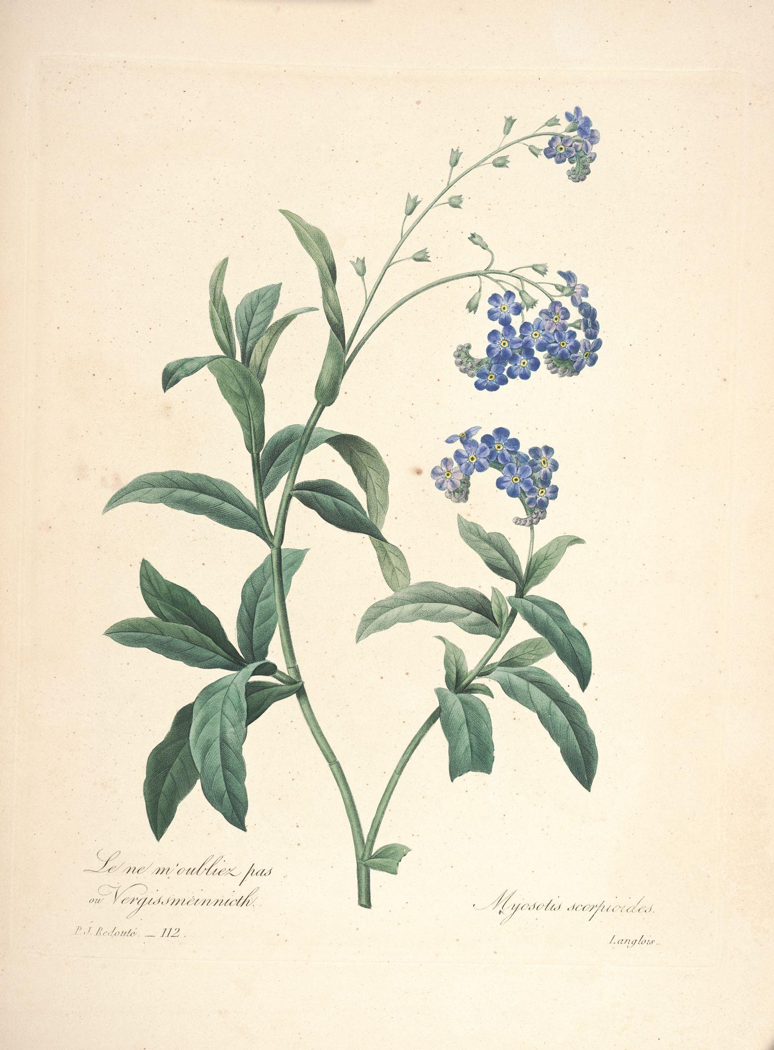 Blog archives internetthing for Commander des fleurs par internet