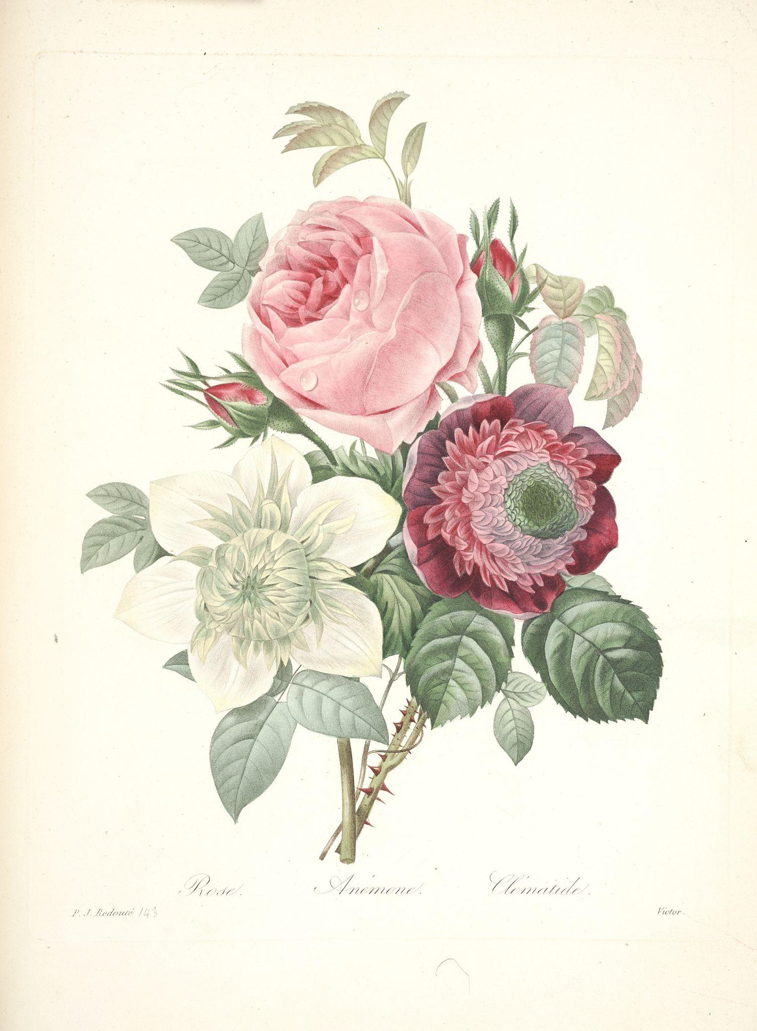 Gravures de fleurs par redoute gravures de fleurs par redoute 167 rose anemone et clematide - Pinterest small spaces gallery ...