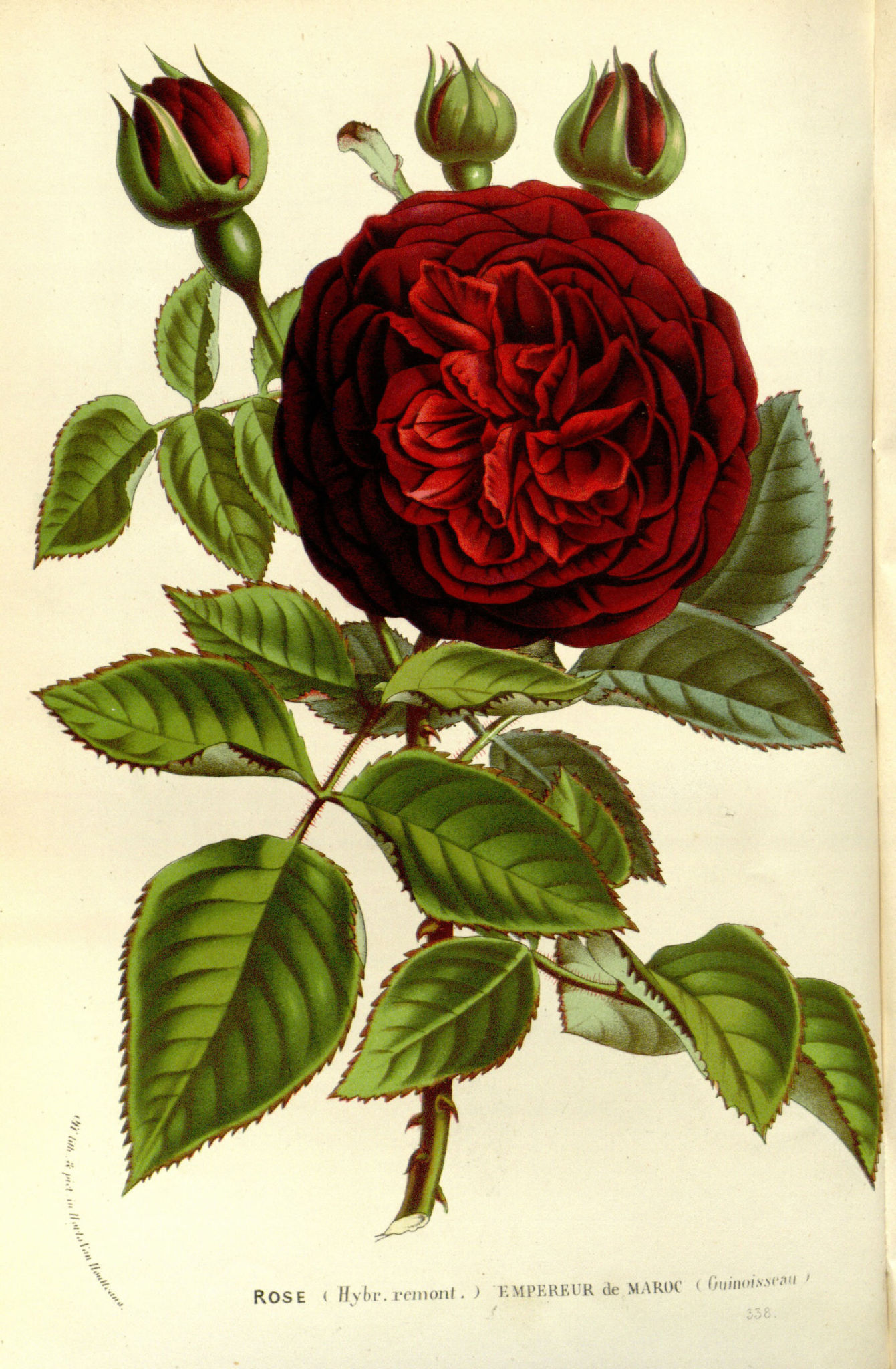 flore serres et jardins Europe - Flore serres et jardins d Europe ...