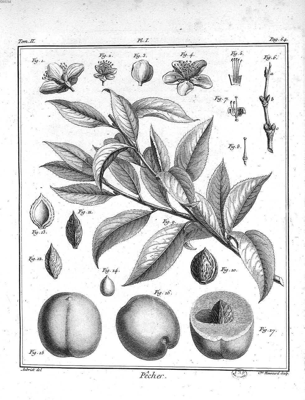 fruits des arbres