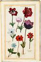 gravures_fleurs_jardin_Henri_IV_-_anemones.jpg