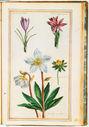 gravures_fleurs_jardin_Henri_IV_-_colchique__-_aconithe__-_crocus_et_elebore_5D.jpg