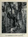 Illustrations_Histoire_naturelle_des_Plantes_017_La_vegetation_en_foret_tropicale.jpg