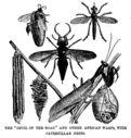 Illustrations_expedition_de_Stanley_en_Afrique_-_demons_du_chemin__mante_religieuse_et_autres_mouches_d_afrique_et_leurs_nids_cartonnes.jpg