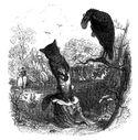 _illustrations_fables_de_la_Fontaine_par_Grandville_-_le_corbeau_et_le_renard.jpg
