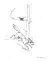illustrations_fables_de_la_Fontaine_par_Vimar_-_le_corbeau_et_le_renard_-.jpg