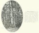 Geographie_de_la_France_en_1900_-_282_Foret_de_hetres_dans_les_Vosges.jpg