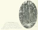 Geographie_de_la_France_en_1900_-_282_Foret_de_sapins_dans_les_Vosges.jpg