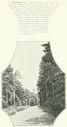 Geographie_de_la_France_en_1900_-_282_Une_foret_route_de_Schirmeck_a_Raon_dans_le_massif_du_Grand-Donon.jpg