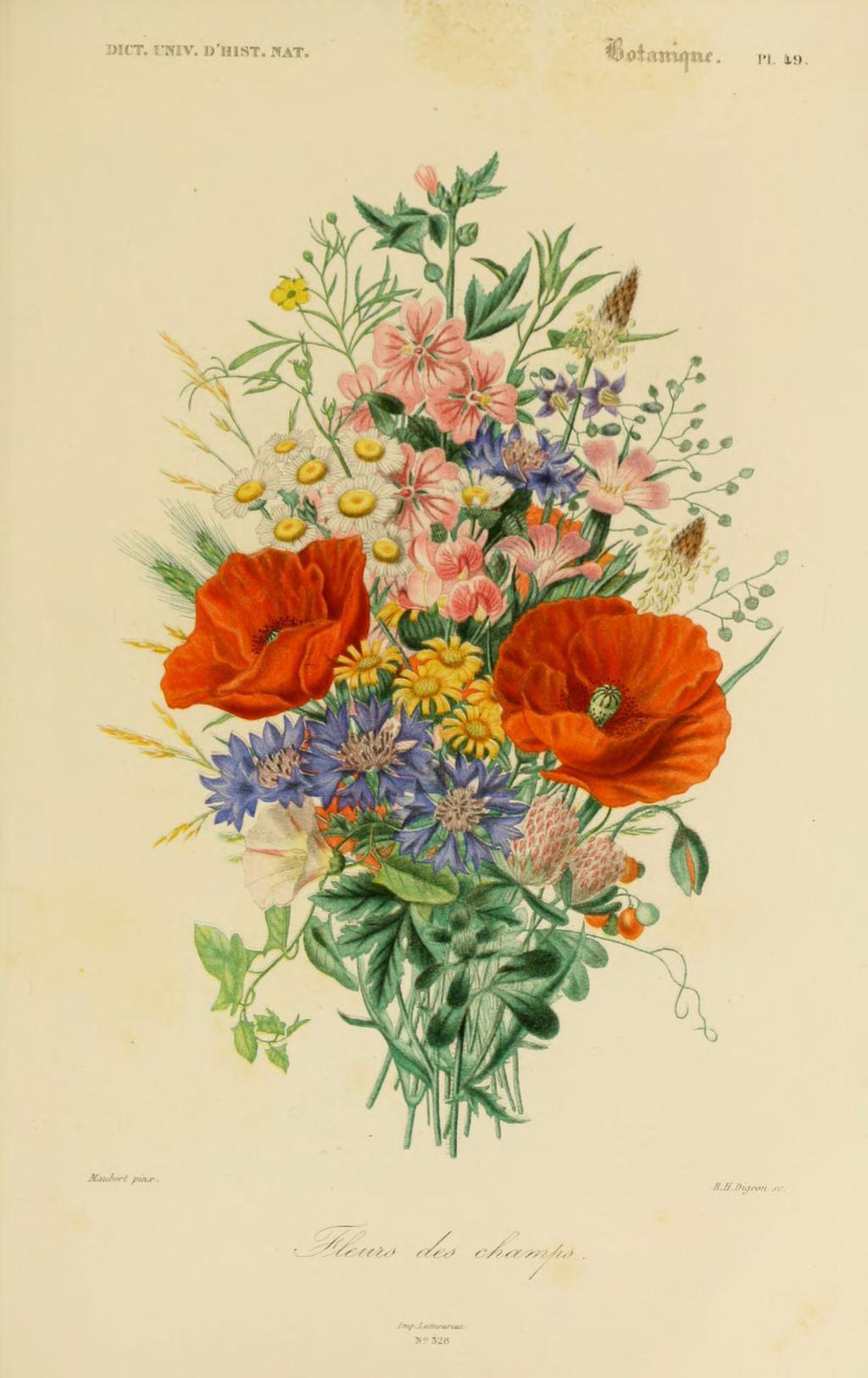 Gravures couleur de fleurs gravure de fleur 0209 fleurs - Dessin de fleur en couleur ...