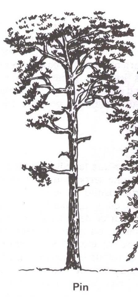 arbre. Black Bedroom Furniture Sets. Home Design Ideas