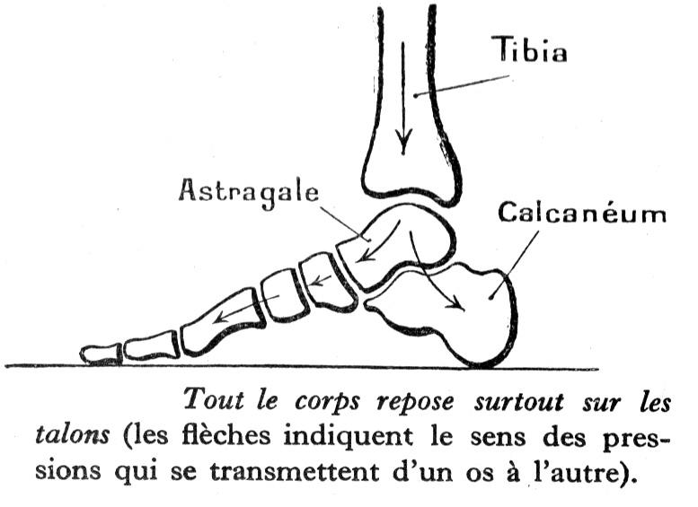 Dessin De Pied Humain dessin anatomie humaine : pressions s exerçant sur le pied